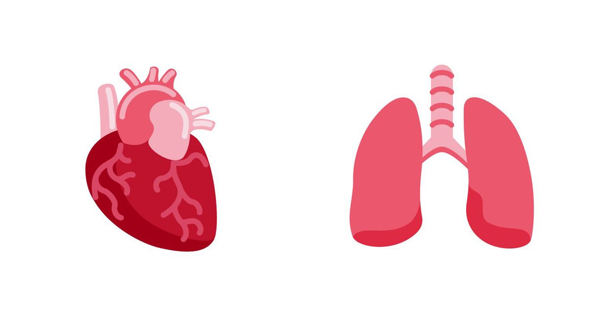 Emojipedia-Twemoji-13-Heart-and-Lungs-2