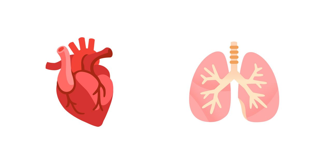 Emojipedia-Android-11_0-Anatomic-Heart-and-Lungs