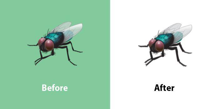 Emojipedia-Changelog-Comparison-WhatsApp-Emoji-13_1-Fly-Emoji
